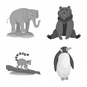 Isolated Object Of Zoo And Park Sign. Set Of Zoo And Animal Stock Vector Illustration. poster