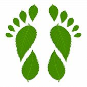 picture of footprint  - Green footprint made by leaves isolated on white with shadow - JPG