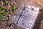 Frog Tadpoles Swimming In Plastic Container On Bank Of Pond. Tadpoles Caught In The Pond. Early Stag poster