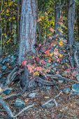 Bright And Vibrant Multicolor Fall Leaves On Branches Against A Large Tree In The Woodlands On A Sun poster