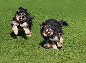 Постер, плакат: Две счастливые собаки