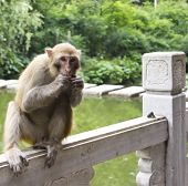 Monkey Enjoying a Snack