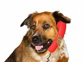 Dog Is Talking On Telephone