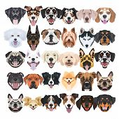 Illustration - Many Laughing And Pretty Dogs poster