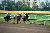 Racing In The Stretch At Gulfstream Park