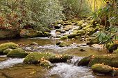 River stream in the Great Smoky Mountains during Fall