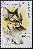 A stamp printed in Afghan shows Devon Rex