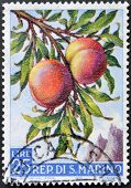 A stamp printed in San Marino shows branch with peaches