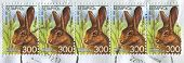 BELARUS - CIRCA 2008: A stamp printed in Belarus shows image of the hare, circa 2008.