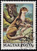 Eine Briefmarke gedruckt in Ungarn zeigt Fischotter (Lutra Lutra)