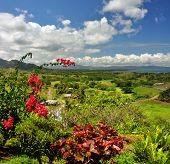 Panorama vertical de la costa de oeste de Fiji.