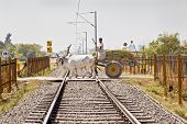 Bullock Cart Over Open Level Crossing