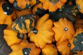 close up of yellow star gourds