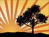 De stralen van de zon van de boom