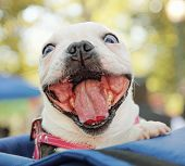 stock photo of goofy  - a cute dog in a back pack in a local park - JPG