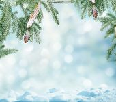 pic of blue spruce  - winter background - JPG