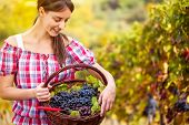 Young woman looking at basket full of red  grapes