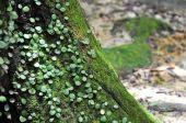 Moss Stub Tree  Ground