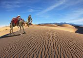 pic of dromedaries  - Gorgeous dromedary yells at the sand dunes - JPG
