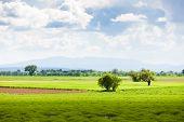 spring lavender field, Plateau de Valensole, Provence, France