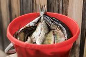 Red Bucket With Fish