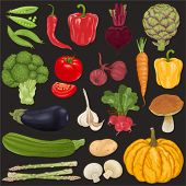 Big vector collection of vegetables.