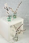 Beautiful apricot blossom in transparent jars on grey wall background