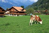 rural scenery of a town in Jungfrau region