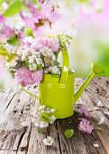 Spring background with beautiful blossom and can