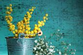 Twigs of mimosa flowers in pail on blue wooden background
