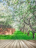 Beautiful blooming of decorative white apple and fruit young trees over bright blue sky in colorful