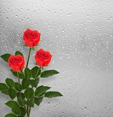 stock photo of san valentine  - Bouquet of red roses on the background of a window with raindrops - JPG