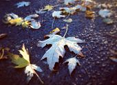Instagram style image of fall leaves on the wet ground the day after Halloween
