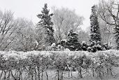 image of polonia  - Trees coeverd with snow in park in Warsaw Poland - JPG