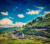 Vintage retro hipster style travel image of Kerala India travel background - green tea plantations in Munnar, Kerala, India