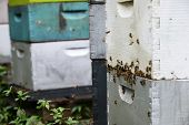 picture of bee keeping  - bees flying around hives at aviary in tropical location - JPG