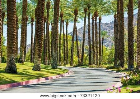 Palm springs road poster id 73321120 for T shirt city palm springs