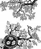 Bird and snail black