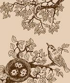 Bird and snail brown
