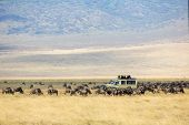 image of herd  - Safari car on game drive in a herd of wildebeests in Ngorongoro - JPG