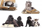set dogs,  puppy and book