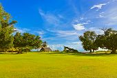 picture of canopy roof  - Canopy and tree at tropical beach  - JPG