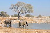 Elephants At Okaukeujo Waterhole