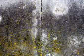 Concrete Surface With Moss, Blocks Joint Line And Rich Texture