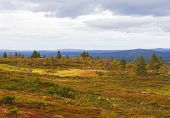 pic of laplander  - Beautiful autumn ruska colours in Lapland - JPG