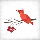Winter Christmas Bird Rowan Tree Branches
