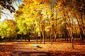 Sunny Day In Outdoor Park With Colorful Autumn Trees And Bench
