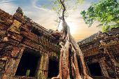 Ta Prohm Temple With Giant Banyan Tree At Sunset. Angkor Wat, Siem Reap, Cambodia