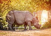 Rhinoceros on a warm autumn day