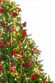 Isolated christmas tree with copy space on one side